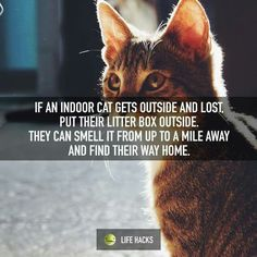 If an indoor cat gets outside and lost, put their litter box outside. They can smell it from up to a mile away and find their way home.