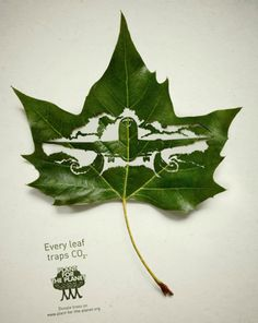 This is a lovely idea for a campaign to communicate environmental issues. These intricately cut leaf illustrations are part of a campaign to communicate how leaves absorb CO2, and was created by Leagas Delaney for Plant for the Planet. Found on Colossal.