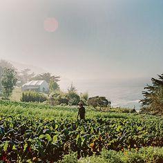 Esalen Institute, Big Sur, California   Coastalliving.com