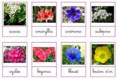 Cartes de nomenclature - fleurs