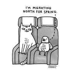 I'm migrating north for spring. by © Gemma Correll