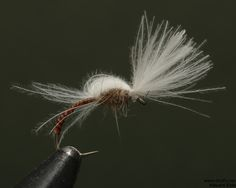 dryfly.me.2014.03.23.midge_emerger