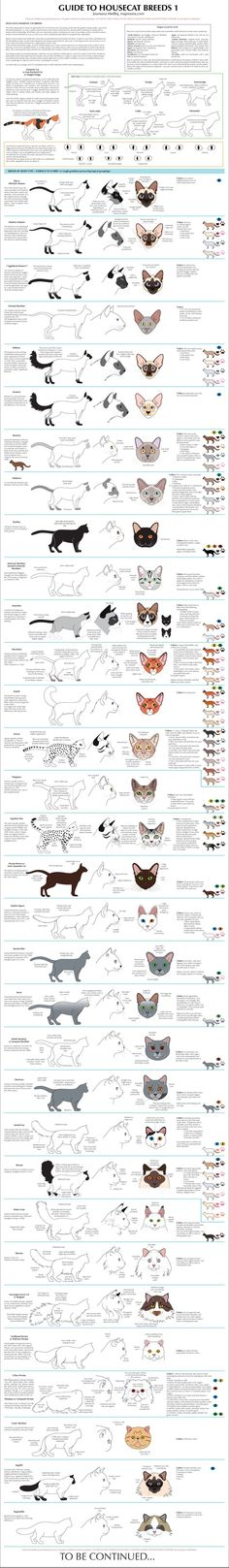 Guide to Housecat Breeds Part 1 by `majnouna on deviantART >>>*Click for site, then click on picture again for larger version. There is also Part 2 at the site, and other art work.