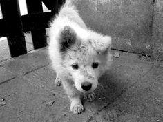Cute Little Animal gifs - dog, hund, puppy, süss - http://www.1pic4u.com/blog/2014/09/03/suesse-hundebabys-46/