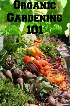 Now that you have your garden set up and seeds planted you need to start thinking about how you want to treat your plants for bug infestation and other diseases. Did you know that many insecticides and fungicides can cause cancer and other health ailments?  Home remedies for common vegetable gardening problems are easy to make and help strengthen your plants so that they actually produce more.