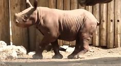 This one with another little bit of nose love. | 23 Baby Rhinos That Will Make You Impossibly Happy