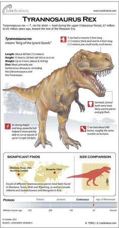 Tyrannosaurus Rex: Facts About T. Rex, King of the Dinosaurs working on my paper! Learn about T. rex's massive teeth, bones, habitat and other dinosaur secrets. Dinosaur Facts, Dinosaur Fossils, Tyrannosaurus Rex Facts, Jurassic World Park, Jurrassic Park, Prehistoric Creatures, Prehistoric Dinosaurs, Dinosaurs Live, Extinct Animals