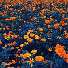 The Perfect World. Flowers Quotes Tumblr, Flower Quotes, Prado, Tumblr Face, Indie, Flower Aesthetic, Orange Aesthetic, Flower Boys, Cute Wallpapers