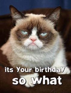 Do you love Grumpy cat. If you do, These Grumpy cat Memes work for you.These Grumpy cat Memes work are so funny and humor. Grumpy Cat Quotes, Gato Grumpy, Funny Grumpy Cat Memes, Funny Cats, Funny Animals, Funny Memes, Grumpy Kitty, Funny Sarcastic, Funny Quotes