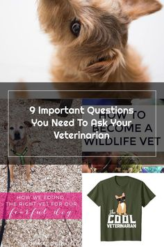 When your dog has an emergency pet owners find themselves working on instinct mode, rushing to the veterinarian. No matter the cause, you are in no condition to ask questions about your dog's future. But thanks to some very special pet parents, we put together a list of the 9 important questions you need to ask your veterinarian when your dog is sick. Keep this list handy. sick dog symptoms | dog health | dog emergency | dog first aid | veterinarian visit
