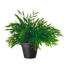 """Ikea Artificial Potted Plant Bamboo 11"""" Lifelike Nature Herb Decoration Fejka - [HOME & GARDEN] Price:$12.47"""