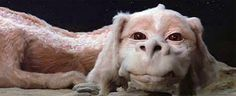 Falkor from The Neverending Story ... always thought of him as the puppy dragon =)