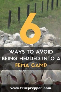 6 Ways to Avoid Being Herded into a FEMA Camp - We'll spoil the big way to avoid it: be prepared! Most people that end up in camps seek them out. Don't have a reason to seek help. #preparedness #prepping #prepper #shtf