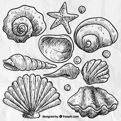 morje Drawing Reference, Line Drawing, Doodles, Doodle Art, Blackwork, Art Inspo, Sea Shells, Illustration, Coloring Pages