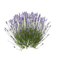 Image result for photoshop flower plants