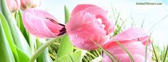 Fresh Pink Spring March Tulips Facebook Cover HolidayFBCovers.com