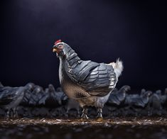 Armour Chicken - CGI & Retouching on Behance
