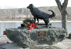Old Shep - Fort Benton, Montana - Waited for his master to return for 5 years