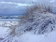 Snowy winter beach, Denmark