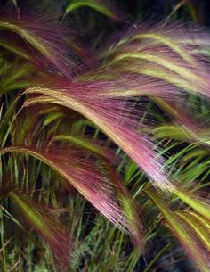 Foxtails swaying in the breeze in Whitehorse, Yukon, Canada. Yukon Canada, O Canada, Rustic Cabin Decor, Western Decor, Yukon Territory, Midnight Sun, Some Pictures, Textures Patterns, Breeze