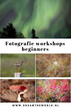 -Bekijk de actuele data op de website-   Leren #fotograferen! Na deze workshop weet je wat diafragma, sluitertijd en iso zijn. Je kent de belangrijke knoppen op je digitale camera. En je weet hoe je betere foto's maakt. Je brengt het geleerde direct in de praktijk. Na deze workshop fotografeer je niet meer op de automatische stand. Lees ook de ervaringen van eerdere deelnemers. Met gratis e-book! #fotografieworkshop #workshop #fotografie