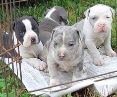 Baby pits
