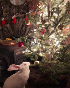 """3,360 Likes, 29 Comments - Guinevere von Sneeden (@guineverevonsneeden) on Instagram: """"To all a good night. May the Yule Rabbit bless you with sweet dreams!"""""""