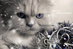 cats and christmas lights images, image search, & inspiration to browse every day. Christmas Bounty, Magical Christmas, Christmas Christmas, Christmas Lights Images, Christmas Pictures, Christmas Desktop, Christmas Graphics, Christmas Kitten, Christmas Animals