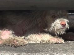 Please watch this short video. Aaron the dog was sleeping under cars in a parking lot for seven months. THIS is why I make a monthly donation to Hope For Paws. I hope you will consider making a donation also.