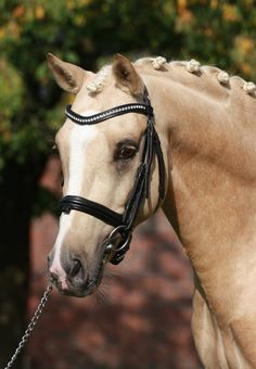 (5) Tumblr Most Beautiful Animals, Beautiful Horses, Animals Of The World, Animals And Pets, Types Of Horses, All The Pretty Horses, Horse Pictures, Horse Farms, Horse Breeds