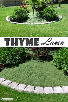 Thyme Lawn – low maintenance & tough turf alternative Make a Thyme Lawn, and take the summer off; no mowing, fertilizing or fuss with a great lawn alternative… Ground Cover Plants, Low Maintenance Landscaping Front Yard, Xeriscape, Lawn, Lawn Alternatives, Low Maintenance Garden, Backyard Garden, Outdoor Gardens, Turf