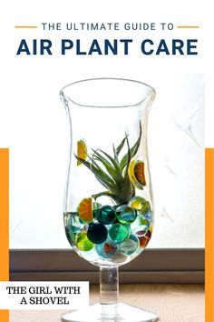 Air plants don't need to be hard... You just need to know what they want! Here's what you need to know to keep your air plant alive and happy! Air Plants Care, Plant Care, House Plants Decor, Plant Decor, All About Plants, Low Light Plants, Plant Guide, Liquid Fertilizer, Bedroom Plants