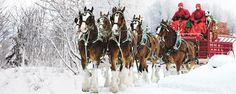 This is my favorite commercial  of all time!! Guess I am starting early Merry Christmas   The Weekly - Clydesdales Keep Holiday Tradition Alive