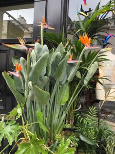 Solutions To Show That Pest Command Products And Services Are Useful For That Individuals Bird Of Paradise Display In Uk Tropical Garden Design, Tropical Backyard, Tropical Landscaping, Outdoor Landscaping, Outdoor Gardens, Tropical Plants Uk, Small Tropical Gardens, Pool Backyard, Birds Of Paradise Plant