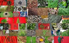 Medicinal Rice based Tribal Medicines for Diabetes Complications and Metabolic Disorders (TH Group-902) from Pankaj Oudhia's Medicinal Plant Database