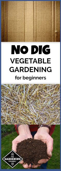 organic garden If youre new to gardening, try a no dig vegetable garden to grow your own food. Here is an easy way to start your own vegetable garden today. Just these easy steps to set up a no dig garden. Vegetable Garden Planner, Raised Vegetable Gardens, Vegetable Garden For Beginners, Gardening For Beginners, Vegetable Gardening, Hydroponic Gardening, Permaculture Garden, Gardening Zones, Veggie Gardens