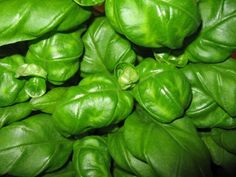 »  Spicy kjøttboller med tomatsaus Sprouts, Tapas, Spinach, Food And Drink, Stuffed Peppers, Vegetables, Dinners, Basil, Velvet