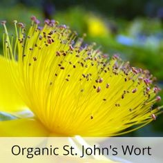 Pomegranate Seed, St. John's Wort, and Bergamot with Hyaluronic Acid Age Away Night Cream