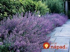 Levanduľa je nielen krásnou, ale aj veľmi užitočnou ozdobou našich záhrad. Vedeli ste však, že táto fialová rastlinka môže ochrániť vašu úrodu? Nie je náhodou, že vo Francúzsku, ktoré je domovom levandule, má každá záhrada záhon levandule. Prezradíme vám, prečo by ste ho mali mať aj vo vašej záhrade!