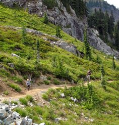 Naches Peak Loop, 3.5 miles.   Easy hike full of alpine scenery. The trail heads along a hillside and through grassy meadows with wildflowers blooming in the spring.