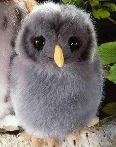 Kosen 5410 Young Tawny owl