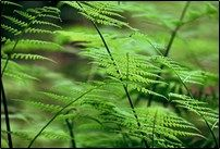 The Ferns at Hobbs State Park