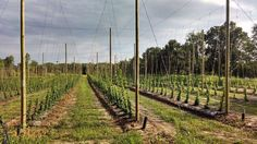 Top Hops Farm aims to grow with Michigan's booming craft brew industry | MLive.com