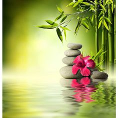 Stones, red hibiscus and Bamboo on the water ❤ liked on Polyvore featuring backgrounds
