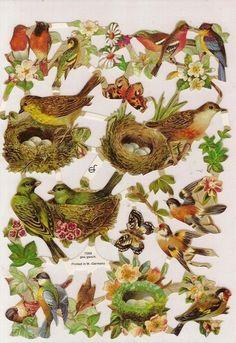 NESTING BIRDS Embossed Die Cuts Victorian Scraps Decoupage Paper Arts GERMANY BIRD via Etsy