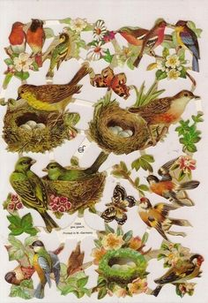 NESTING BIRDS Embossed Die Cuts Victorian Scraps Decoupage Paper Arts GERMANY BIRD via Etsy