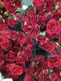 Sold in bunches of 10 stems from the Flowermonger the wholesale floral home delivery service. Red Wedding Flowers, Red Flowers, Spray Roses, Stems, Diy Wedding, 30th, Purple, Pink, Jade