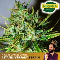 Buy Cannabis Seeds, Weed Seeds, Fruit Garden, Bud, South Africa, Herbs, Plants, Orchards, Herb