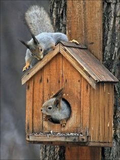 Squirrel Squatters in Birdhouse-- id want it for real for the squirrels!!!