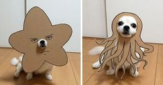Japanese Woman Creates Hilarious Cardboard Cutouts With Her Dog (10+ Pics) | Bored Panda